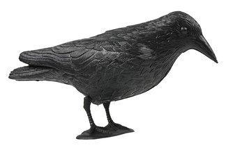 Kruk siedzący – skuteczny odstraszacz ptaków