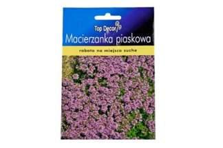 Macierzanka piaskowa Creeping Thyme-  Top Decor ND54780