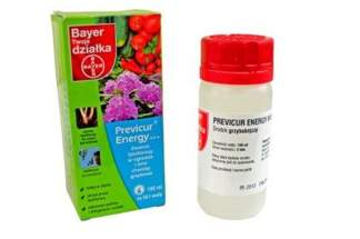 Previcur Energy 840 SL Bayer 100 ml – środek grzybobójczy (fungicyd) do ochrony roślin ozdobnych i warzyw