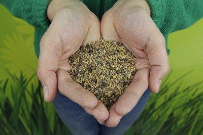 Mieszanka poplonowa, nasiona na poplon 5 kg
