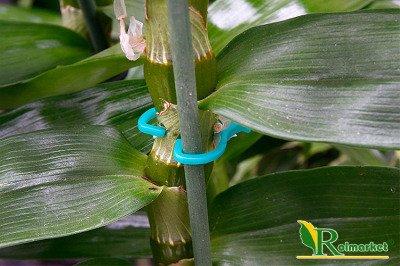 Spinki do prowadzenia roślin GR5015 Greenmill